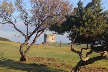 Torre della Pelosa tra la vegetazione